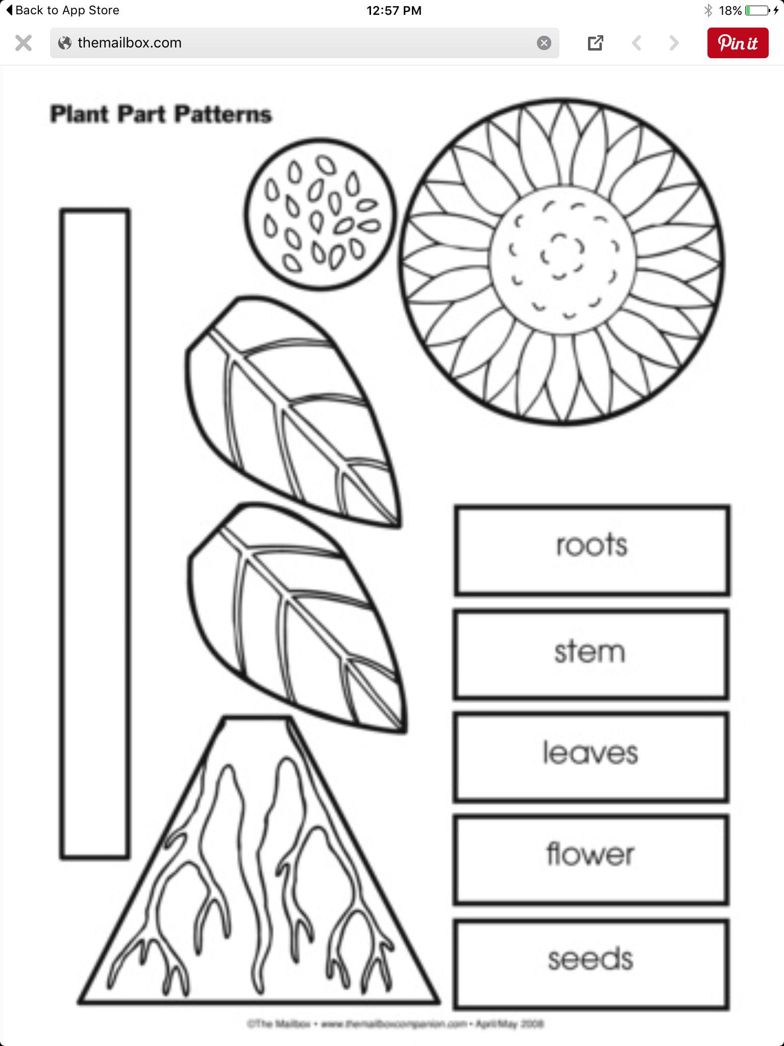 Planting | Planting | Pinterest
