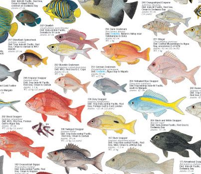Coastal Fishes Of Southern Africa 3 Coral Rocky Ree Fish Fish Chart Sea Fish