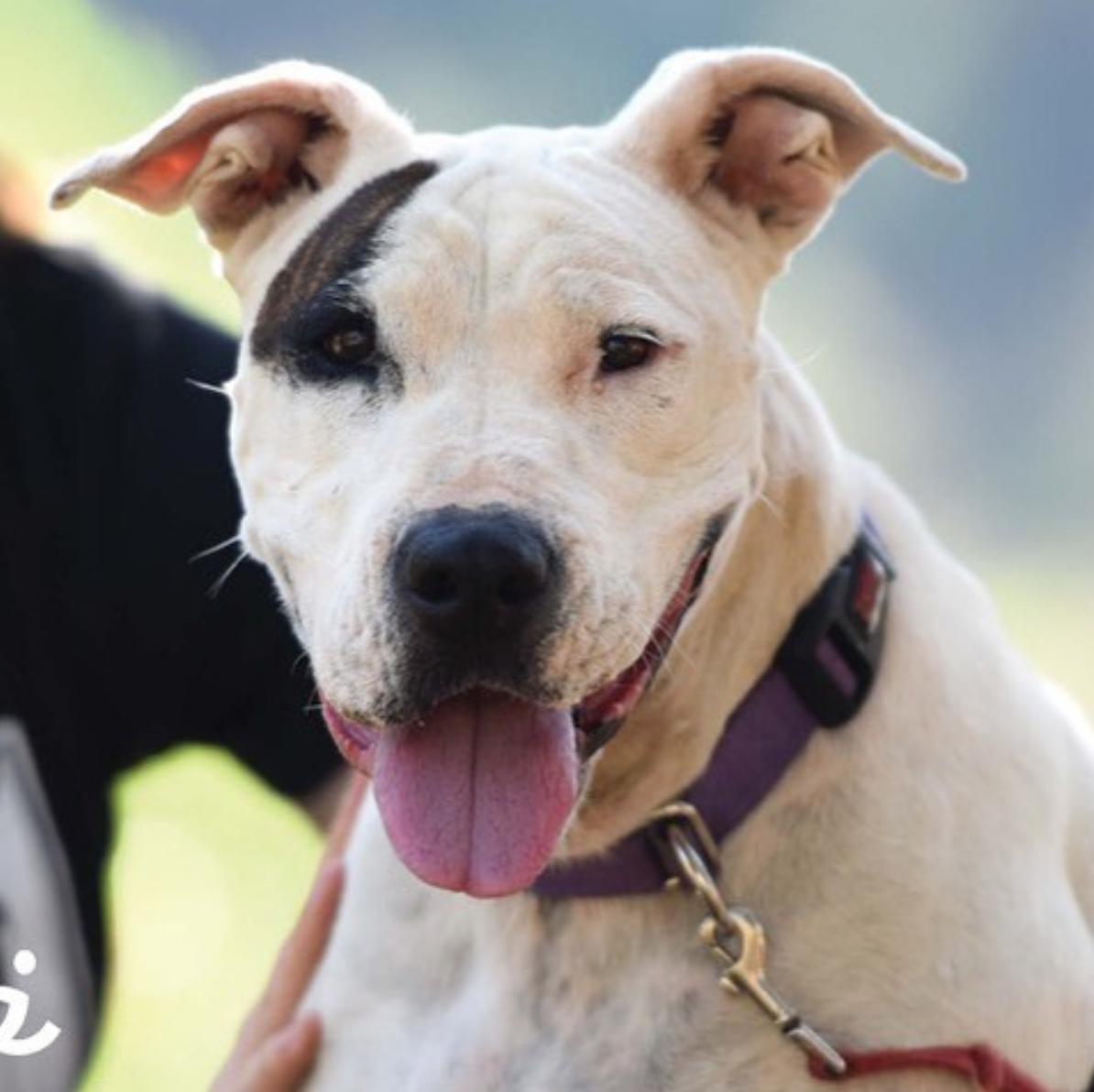 Meet Yuma, our new Mutt Crush Monday! Petco, Animals, Mutt