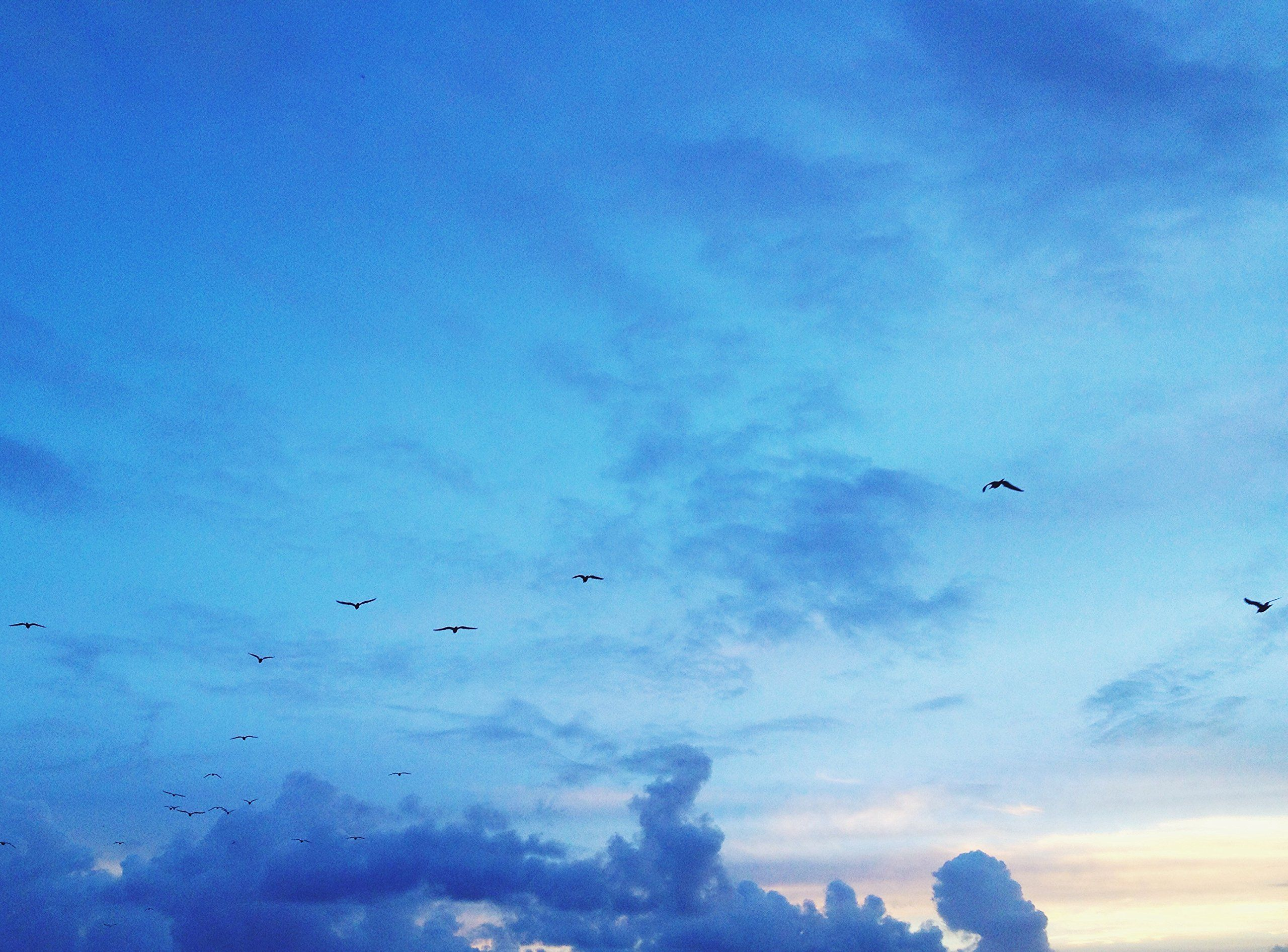 Birds And Blue Sky. This is a fine art print from a limited edition ...