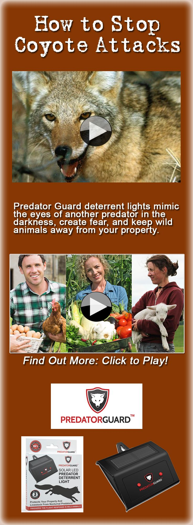 Learn how to stop coyote attacks by ridding your yard or garden of ...