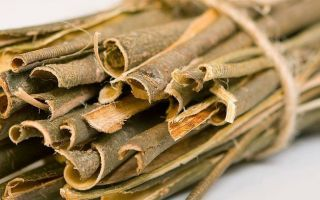 целебные свойства коры осины при простатите