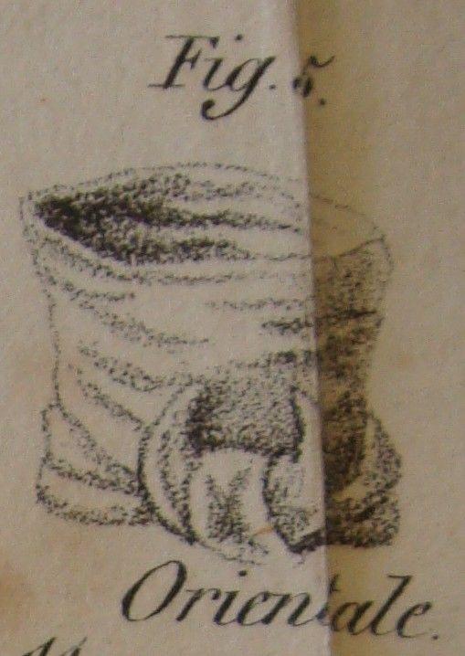 The Cravate à la Orientale: the neckcloth in the shape of a turban, the ends form a crescent.