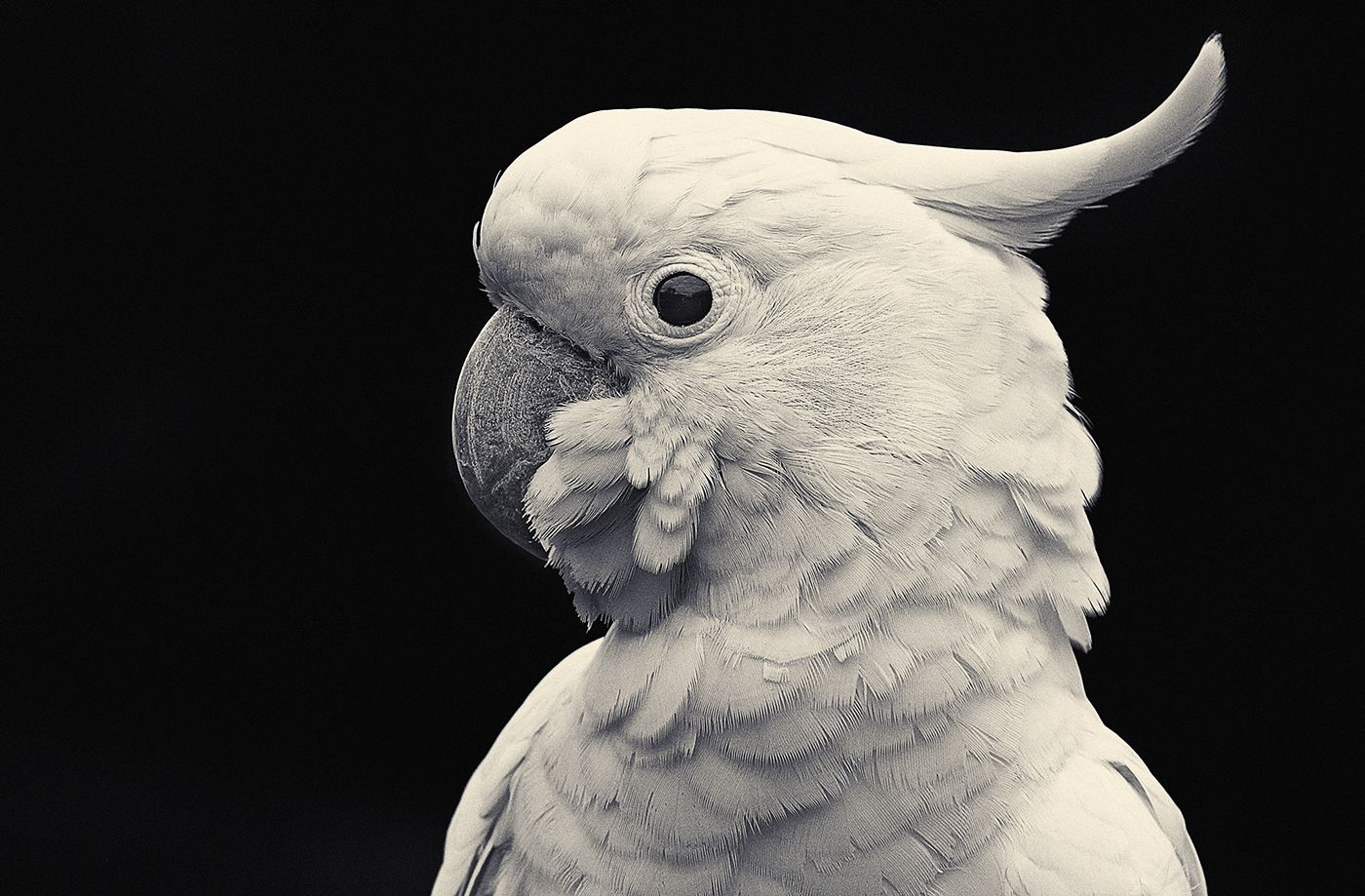 FEATHERED on Behance