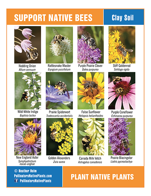 Plant Lists Posters Bees Plants Pollinator Plants Plants