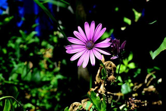 #Flores #Naturaleza