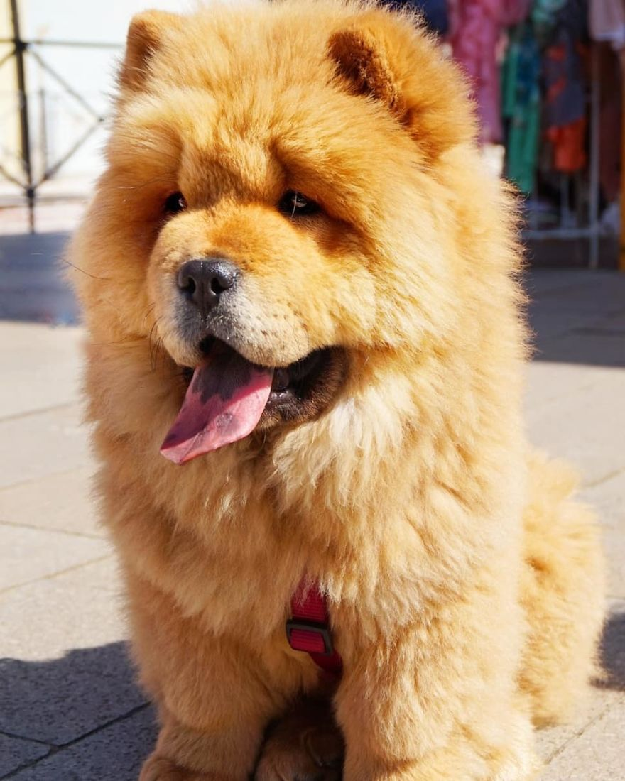 We Photograph Dogs Of Strangers On The Streets Of Lithuania The