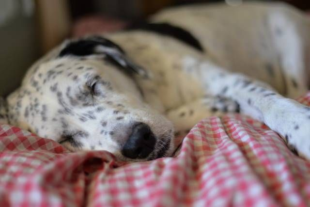 Melatonin For Dogs Benefits Usage Dosage Travel Pinterest