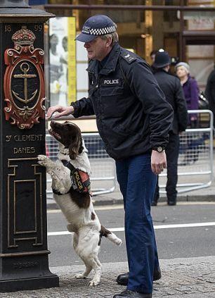 1500 лири пенсия за полицейско куче - Първи Български Зоопортал