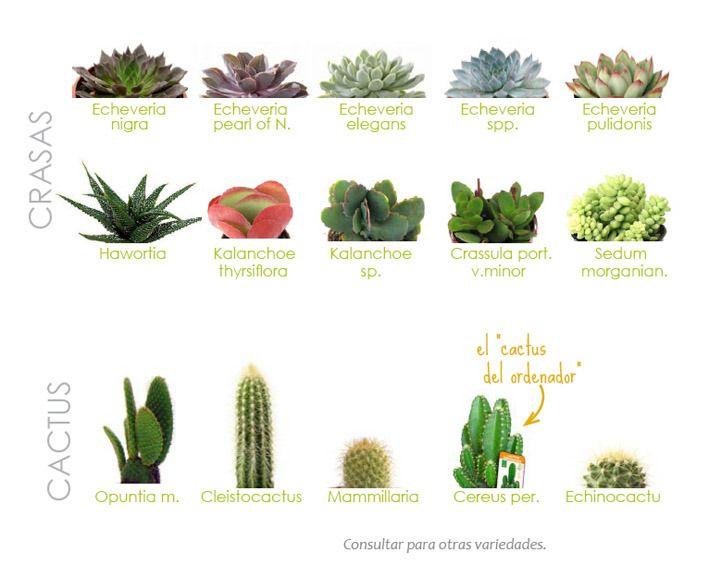 Plantas crasas s k p google crasas pinterest b squeda for Cactus variedades