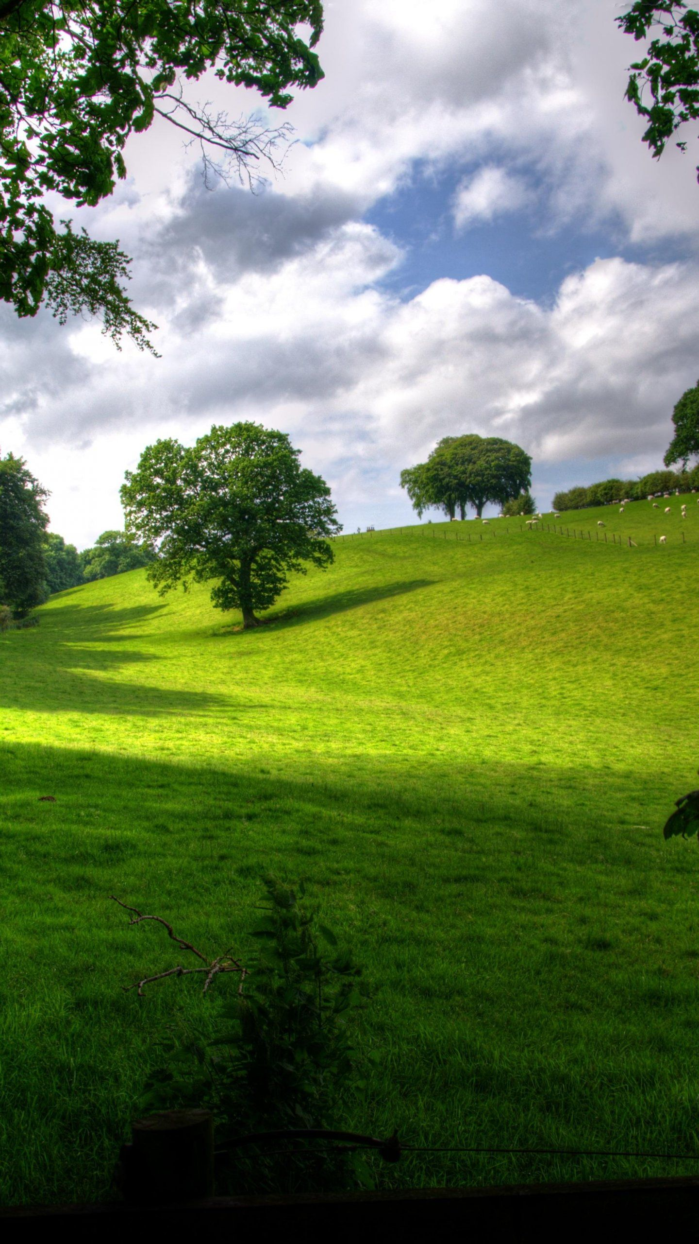 Bright Light Meadow Wallpaper Iphone Android Desktop