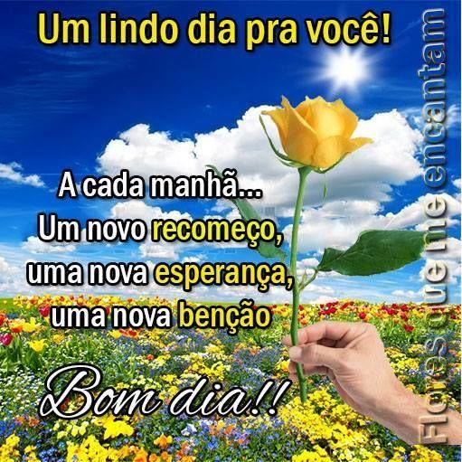 Mensagem De Bom Dia Papel De Parede Flor Rosa Cor Amarela Frases