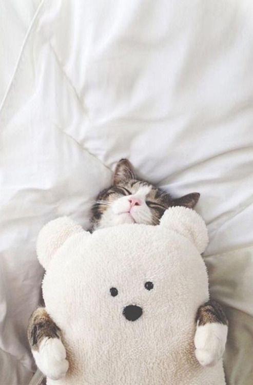 cat  (>'-'<)
