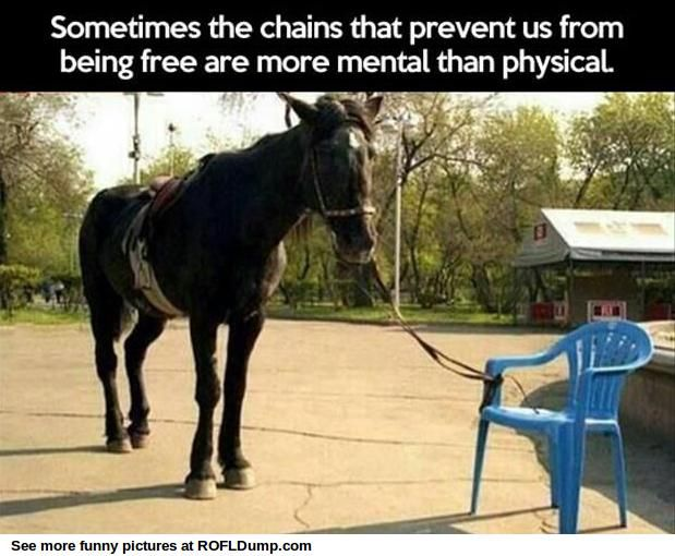 It's true. Sometimes I just put the reins over a fence without tying them and she doesn't move.