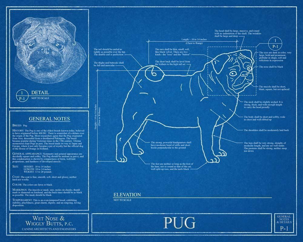 Pug blueprint this pug blueprint is a wonderful piece of art that pug blueprint this pug blueprint is a wonderful piece of art that will make a great gift optional personalize this print with the name of your dogs malvernweather Choice Image