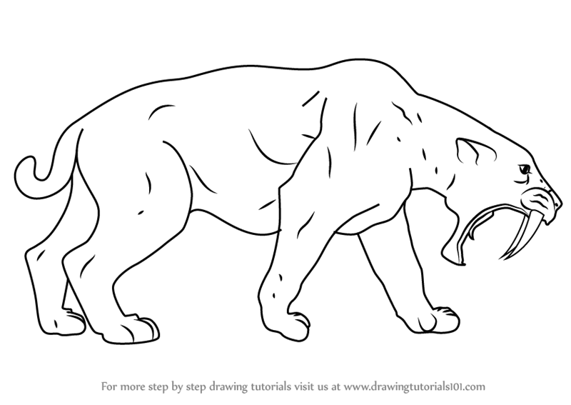 Saber Tooth Cat Coloring Pages Background