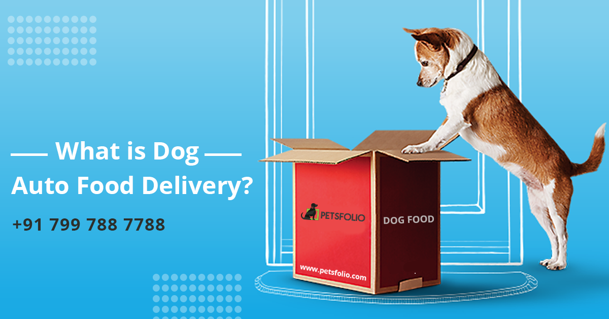What Is Dog Auto Food Delivery Food Delivery Dog Food Delivery Dog Food Online