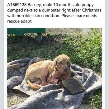 Dog with severe case of mange abandoned next to Miami dumpster