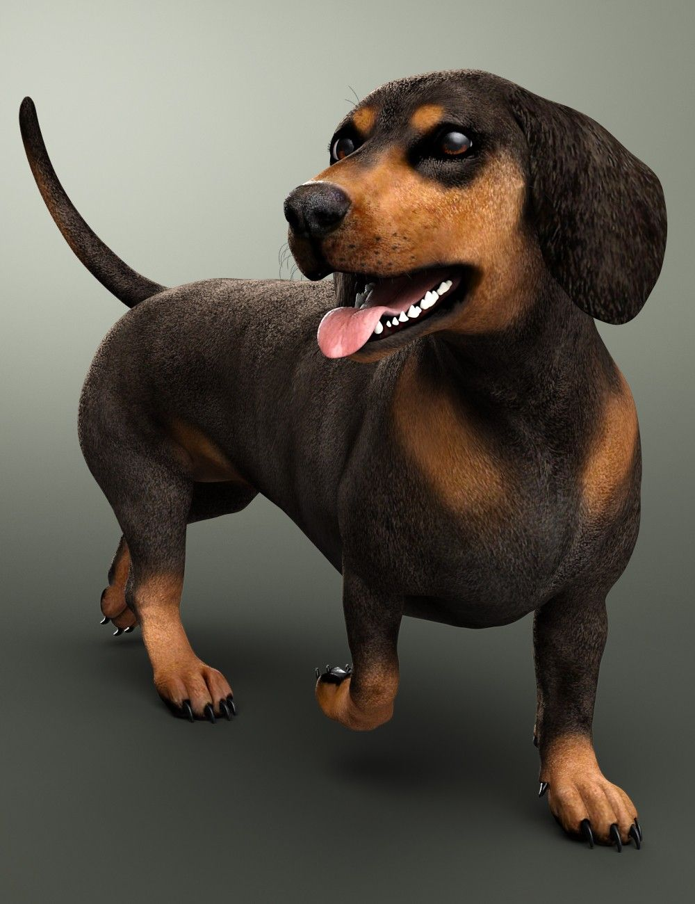 Dachshund For Daz Dog 8 3d Models And 3d Software By Daz 3d