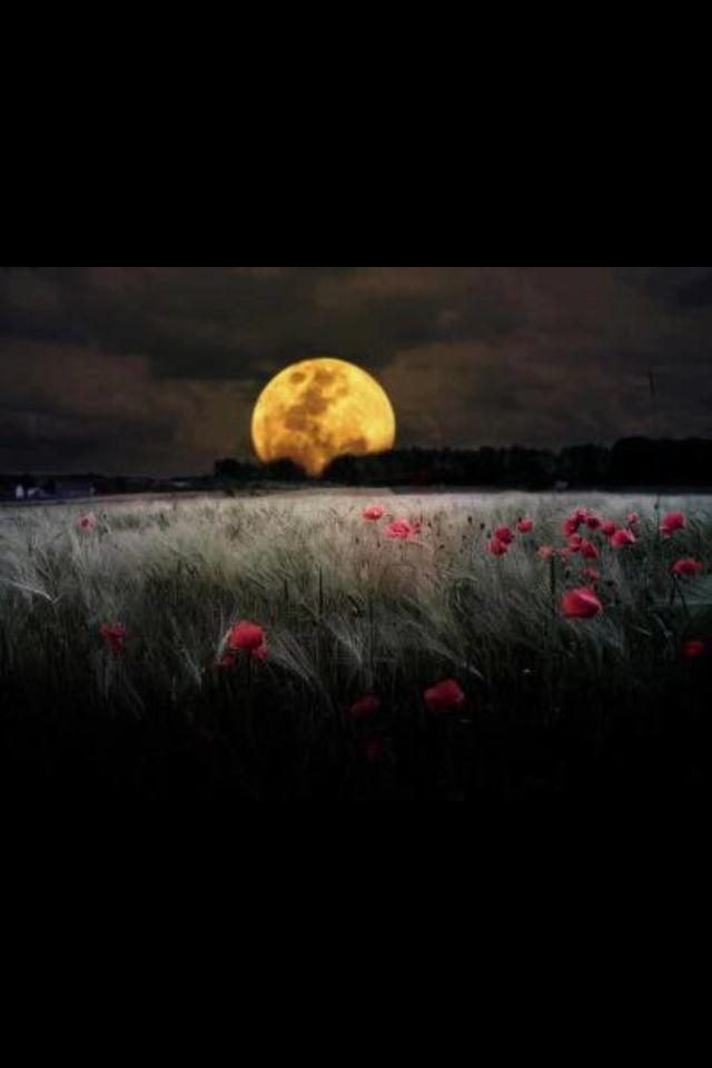 Good Night Beautiful Moon Nature Photography Beautiful Nature