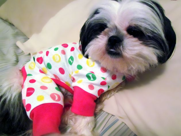 Mama Splurged And Got Me Polka Dotted Pajamas Dog Pajamas