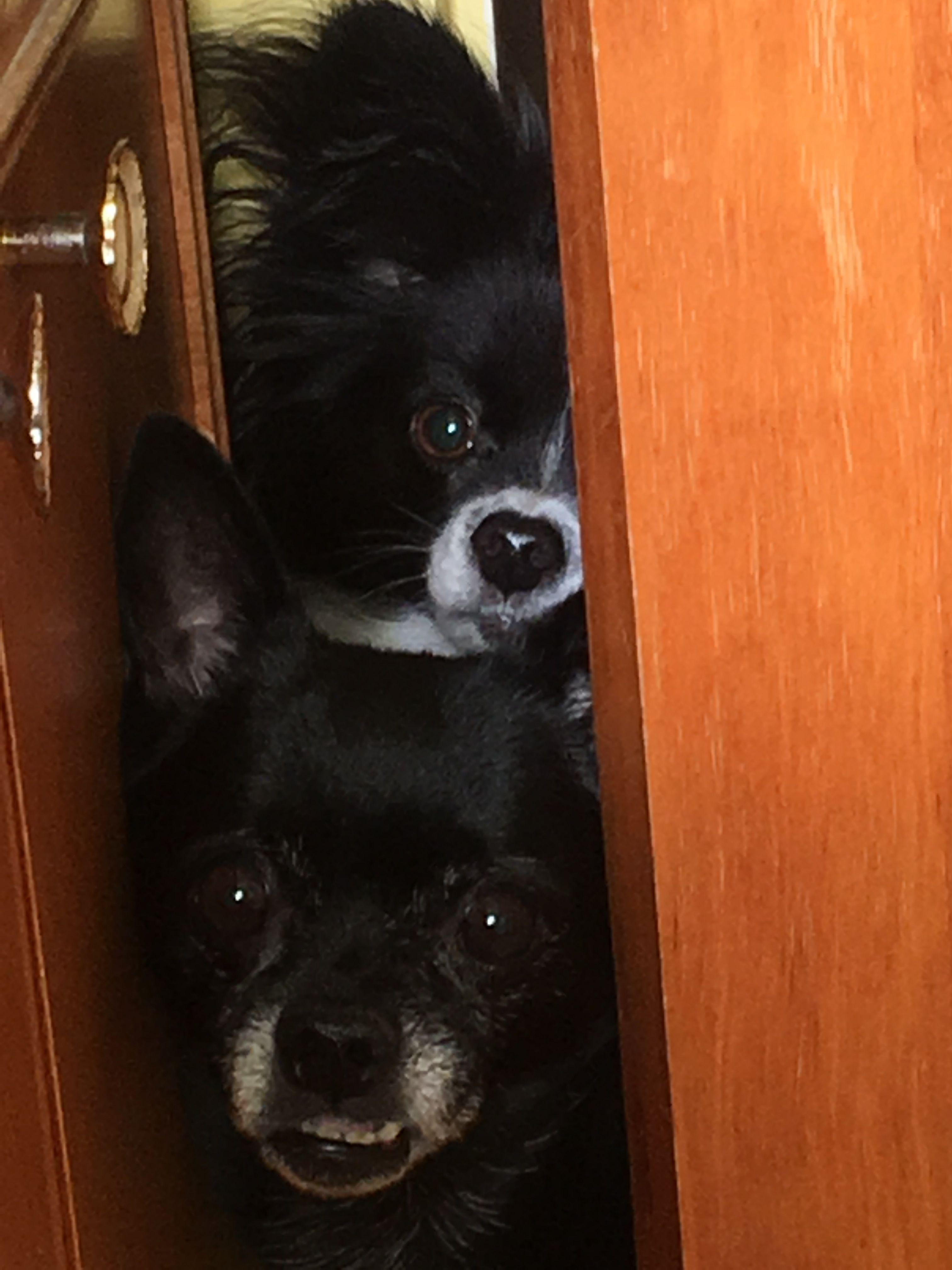 Peeping Pups Pup Fur Cute
