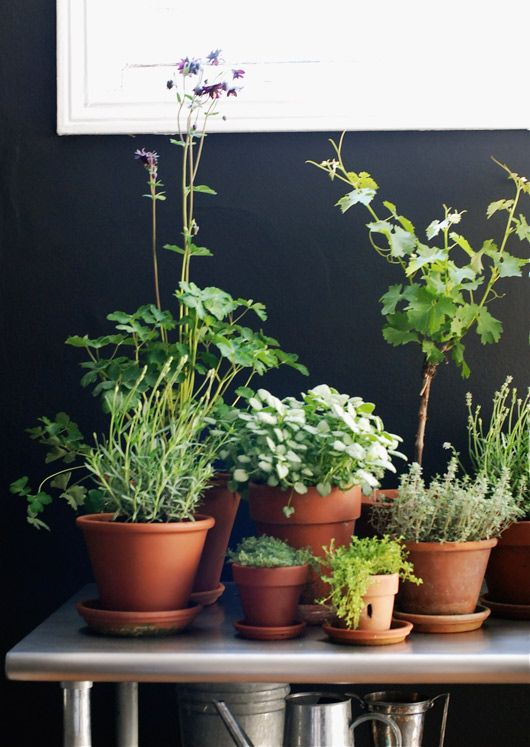 Just like our patio: herbs like rosemary, basil, thyme, lavender and mint against a dark wall. (Photo: sfgirlbybay)