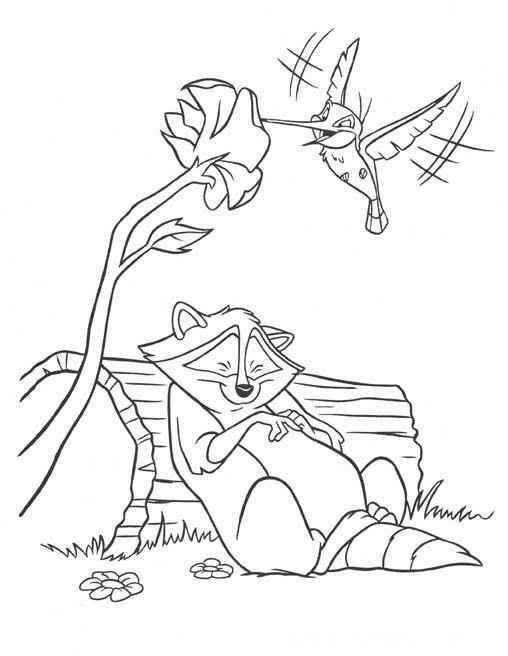 Pocahontas Raccoon Sleeping And Colibri Bird Coloring Page Bird