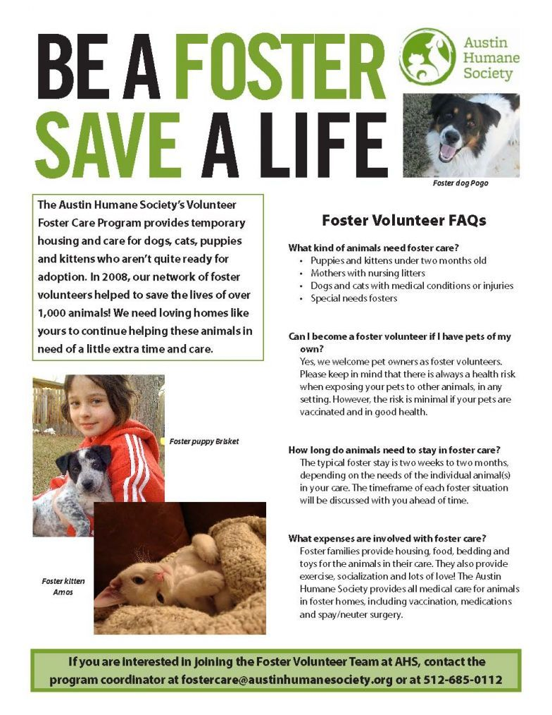 Sample Foster Recruitment Flyer In 2020 The Fosters Humane Society Volunteer Austin Humane Society