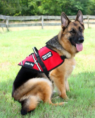 Customizable Padded Service Dog Vest Id Badge Holder Search