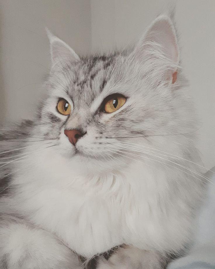 #mycat  #lovecat  #lovemycat  #lovecats  #catlove  #cat  #cats  #kittens  #lovekittens  #sibiriskkatt  #sibiriskkattunge  #sibiriskkattpåinstagram  #siberianforestcat  #siberiancatlife  #siberiancatsrock  #siberiancat  #siberiancatlover  #siberiankitten  #siberian  #siberiancatsofinstagram  #siberiancatofinsta  #we_love_siberian_cat  #siberiancatlovers  #fluffycat  #purrfect  #catloversclub  #catsofinstagram  #cats_of_instagram  #catstagram  #cats_of_worldMy beautiful girl ... #Bridge #beautiful