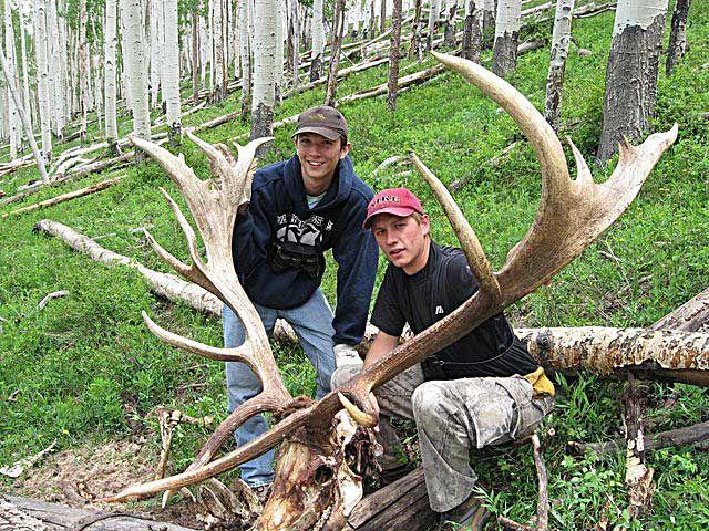 dead elk new mexico | Huge Elk | Wedding | Elk hunting, Elk