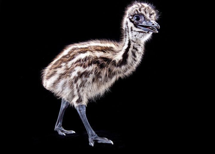 Emu Mobili ~ Best emu italy images emu backyard furniture