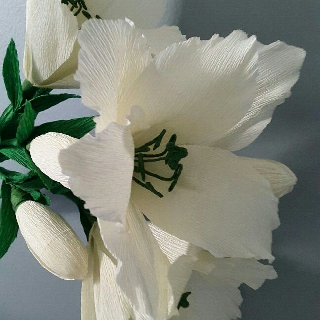 Lilie Z Krepiny Plants