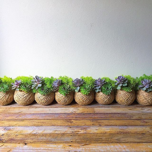 How Do I Care For My Succulent Kokedama Tips Advice