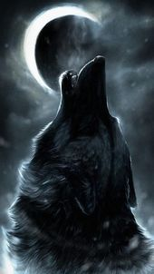 Photo of Epic Wolf Wallpapers Full Hd » Hupages » Download Iphone Wallpapers  Epic Wolf…