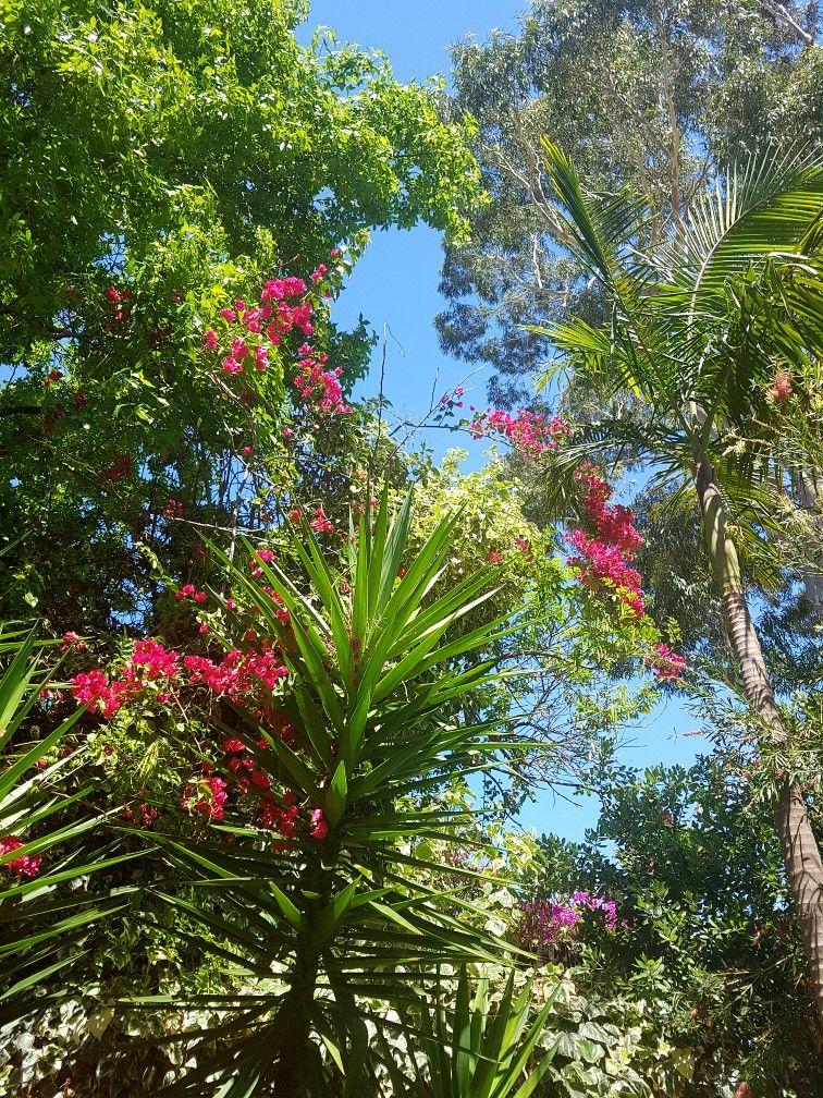 Amature Photography Photography Plants Garden