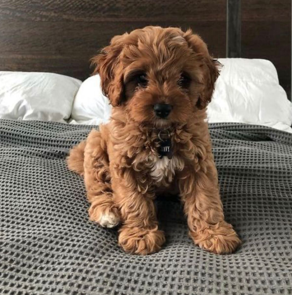 Pin by the moon maiden on cuties in 2020 cute dogs