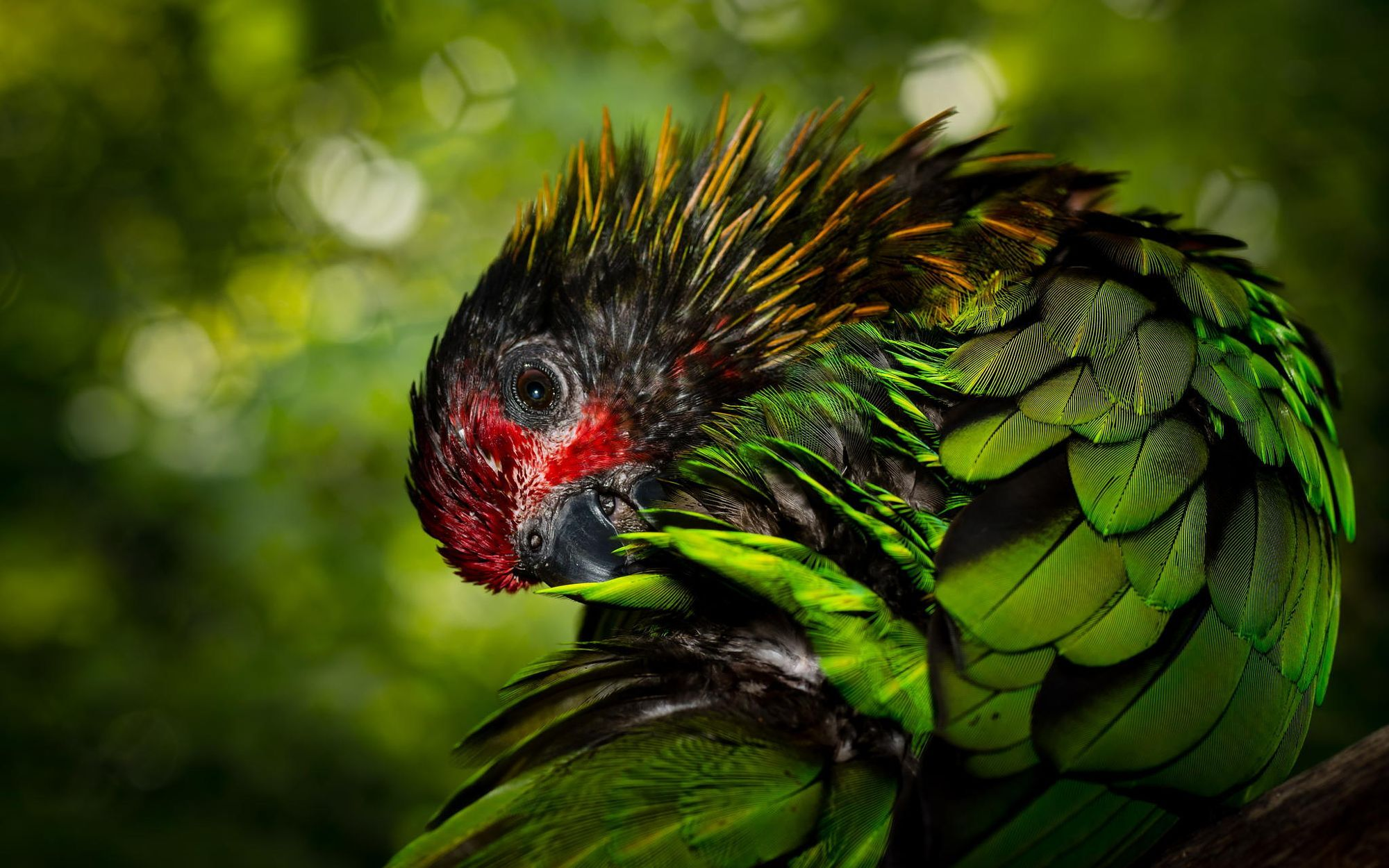 Preening by Travis Cottrell on 500px