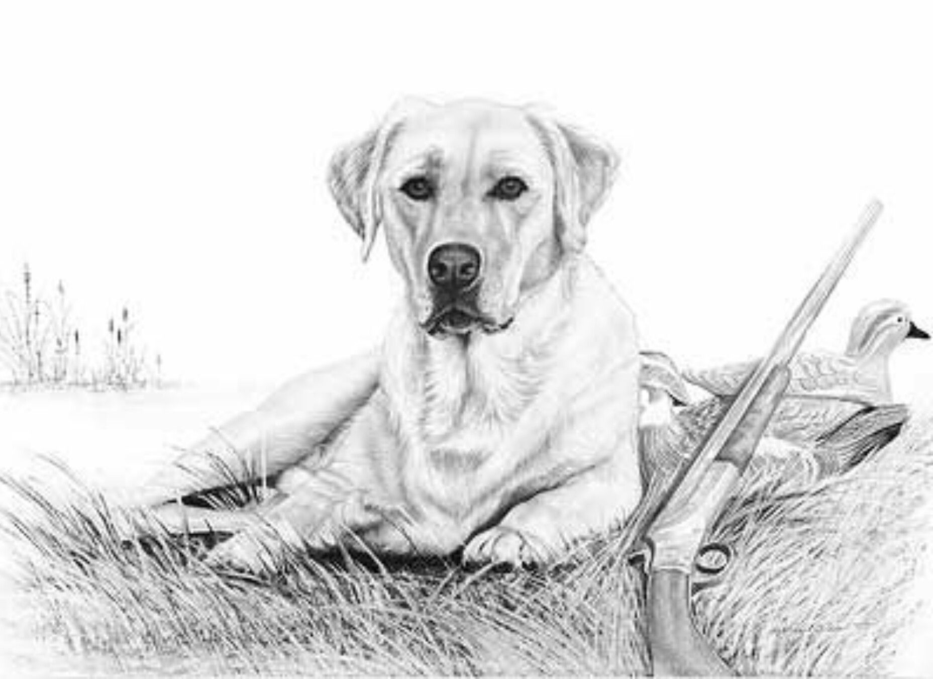 Hunting Dog Paintings Dog Drawing Puppy Drawing [ 1351 x 1857 Pixel ]