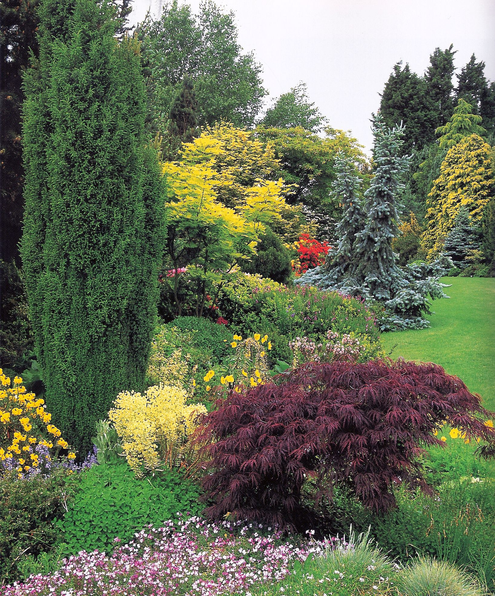 T Mixed Border   Front yard landscaping, Backyard landscaping
