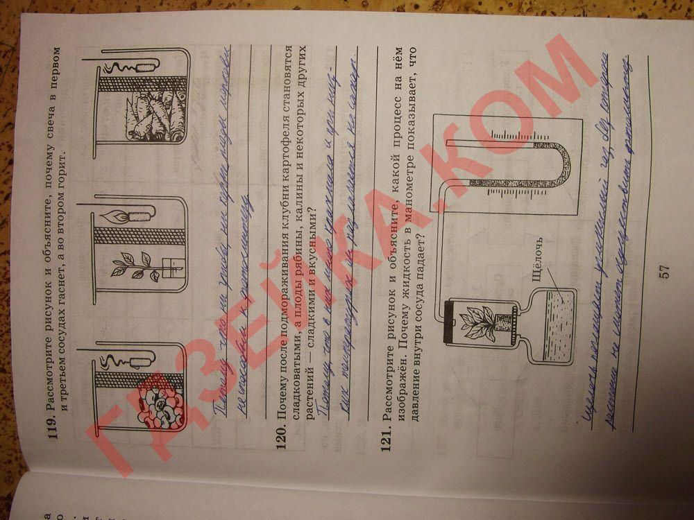 Гдз по учебнику английского языка new millenium бесплатно без регистрации