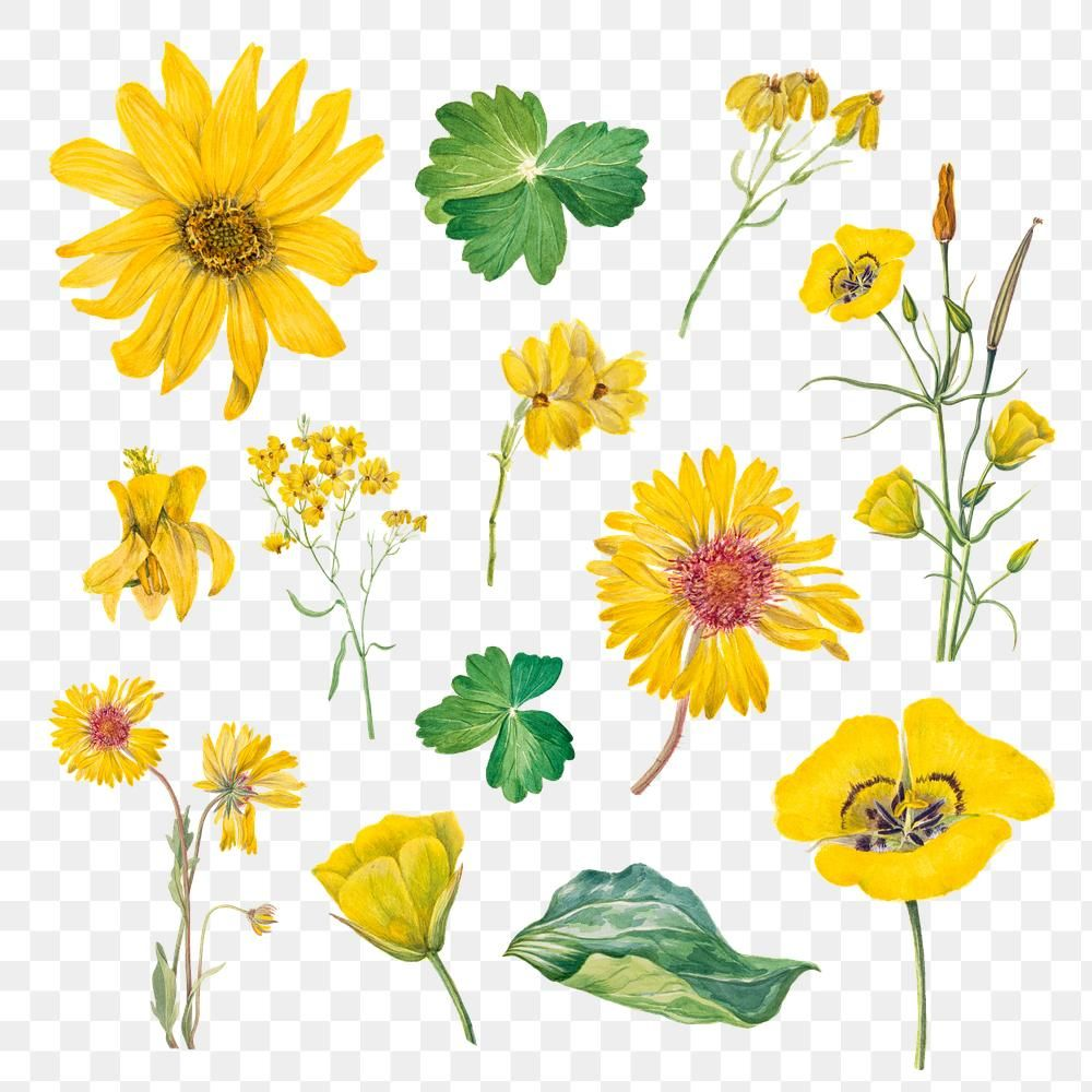 Download Premium Png Of Vintage Yellow Flower Blooming Png Illustration Flower Illustration Yellow Flowers Flower Doodles