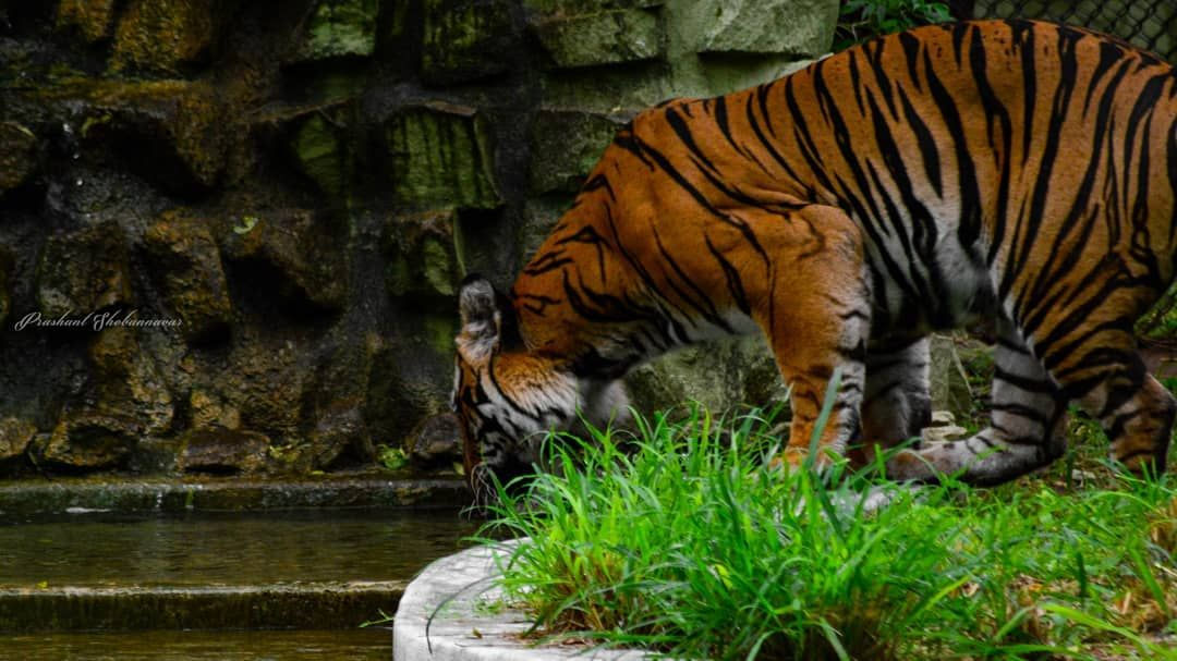 Silent Mysorediaries India Belagavi Mysore Zoo Animals Love Freeanimals Dontcageanimals Animalplanetupc Animal Planet Animals Wild Animals