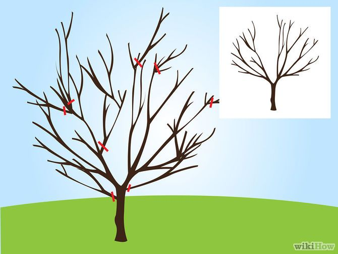 When Do You Prune Fruit Trees Part - 24: How To Prune A Cherry Tree: 11 Steps (with Pictures) - WikiHow