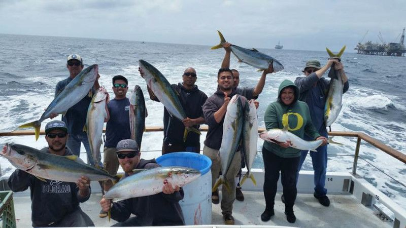 Southern cal sportfishing fish report yellowtail halbut for Southern california fishing report