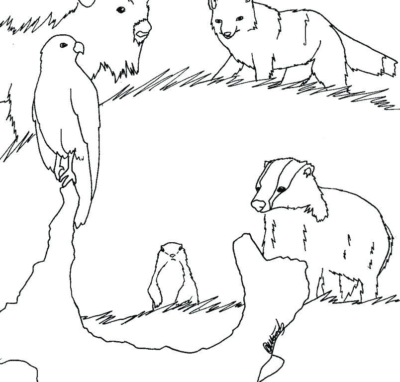 African Animals Coloring Pages Animal Coloring Pages Safari Animal