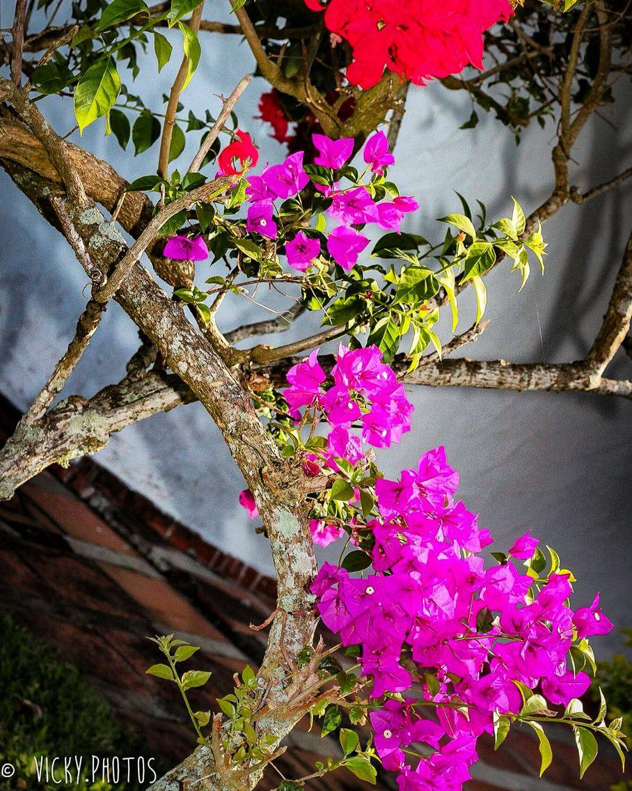Chegou Setembro !!!  #setembrolindo #mesdaprimavera #flower #decorecomfoto @vicky_photos_infantis https://www.facebook.com/vickyphotosinfantis http://websta.me/n/vicky_photos_infantis https://www.pinterest.com/vickydfay https://www.flickr.com/vickyphotosinfantis