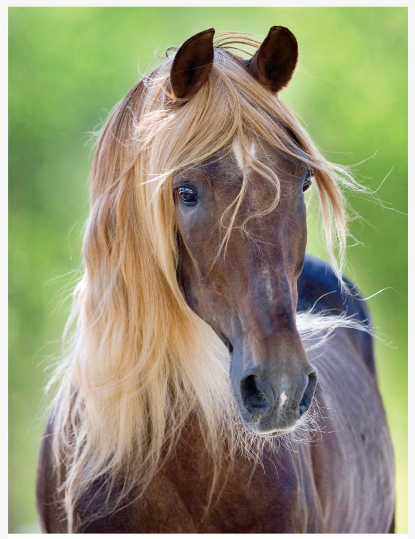 Beautiful horse! Striking color—maybe liver chestnut with ... - photo#48