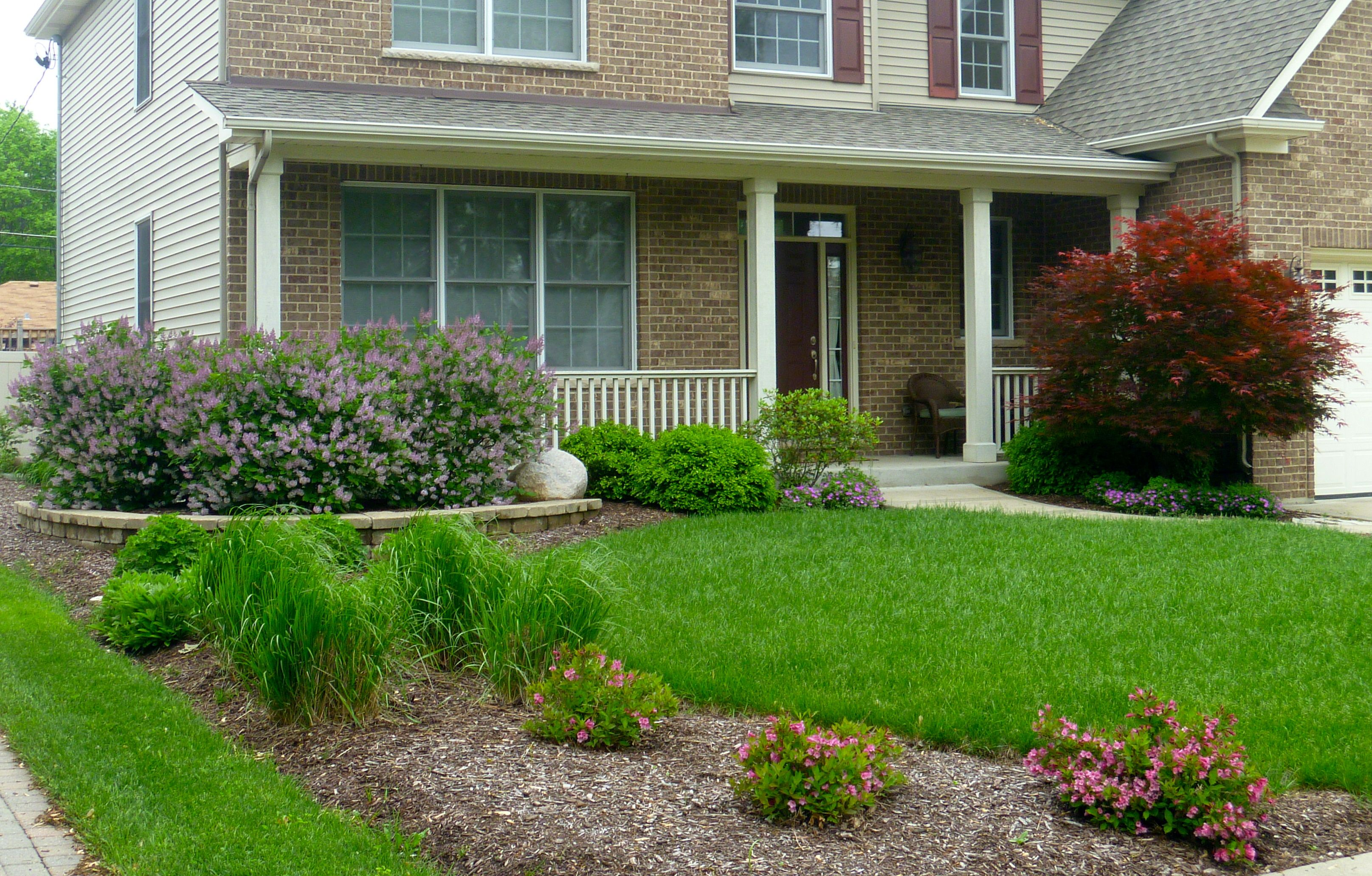 Front Yard Lilacs Japanese Maple Lombard Il Land